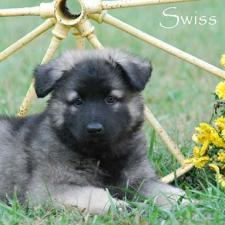 nssWk7-swiss1