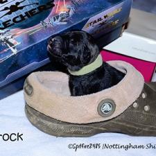 ntg-1st-crock