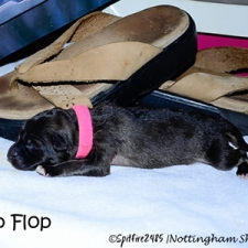 ntg-1st-flipflop