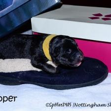 ntg-1st-slipper