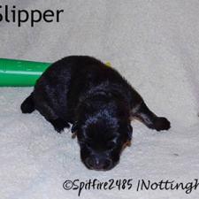 ntg-Wk2-slipper