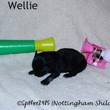 ntg-Wk2-wellie