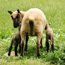 Wolfs Head Farm